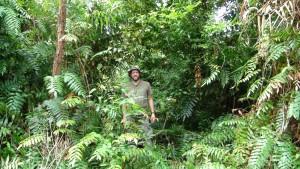 DinoDave - Jungle Bush Small